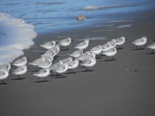 seabirds 057